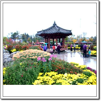 국화꽃2.jpg