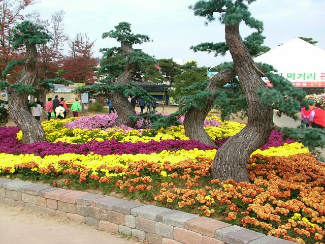 함평꽃축제023.JPG