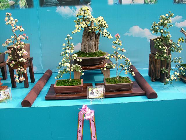 함평꽃축제028.JPG